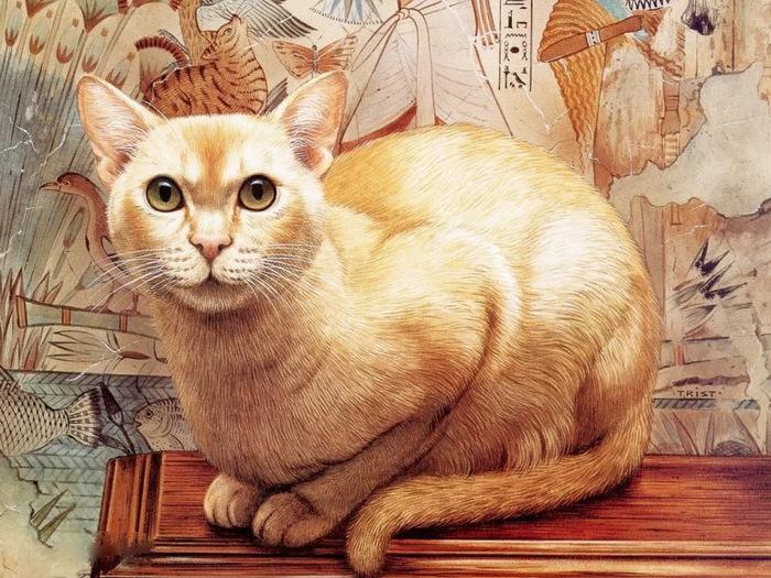 Кот Максiм