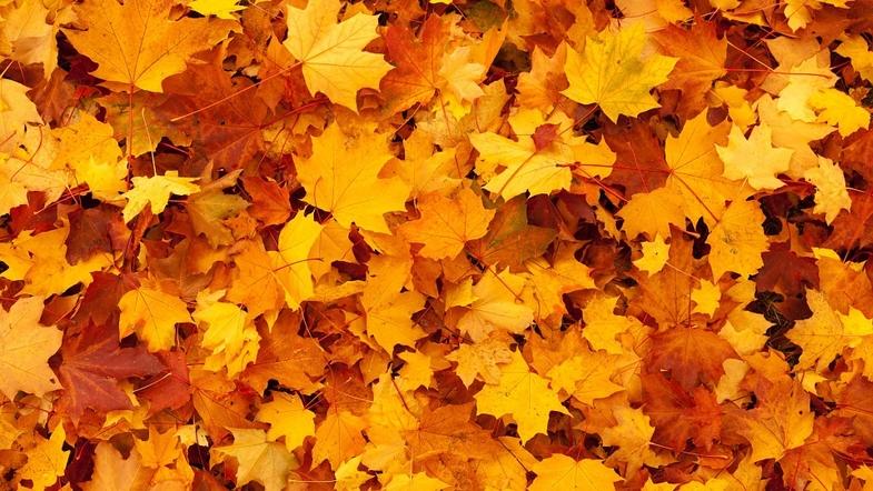 Вершы пра восень