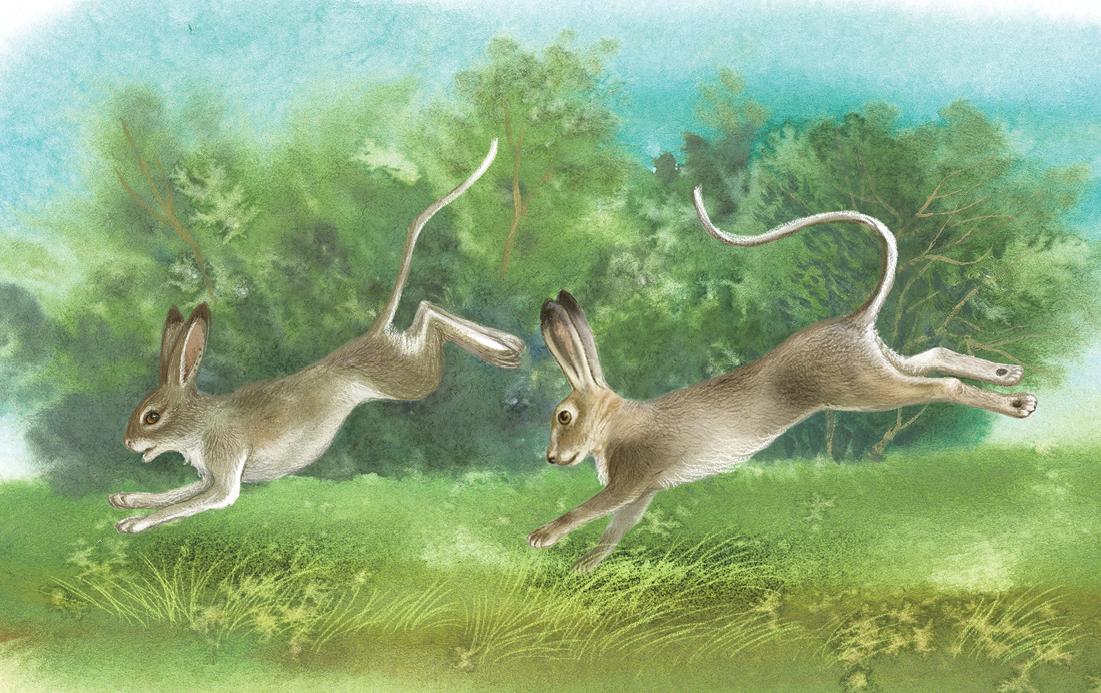 Новыя хвасты для зайцоў